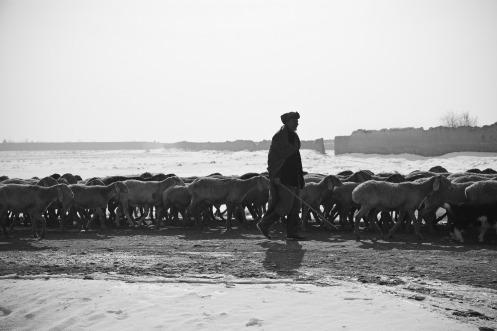 shepherd-60657_1920